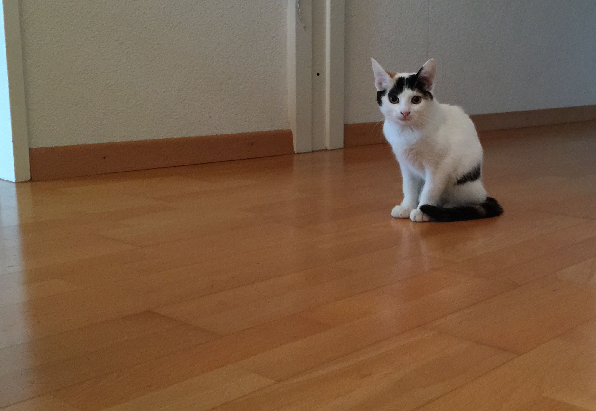 Cat Loulou_www.esthersviewpoint.com