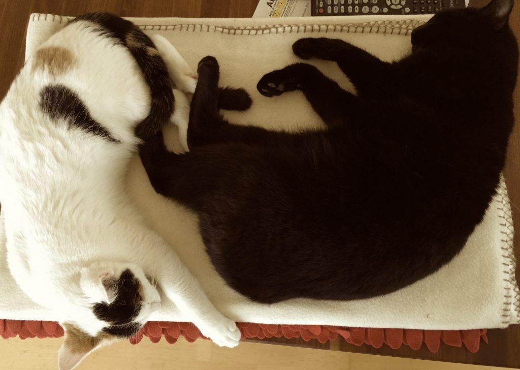 Cat harmony_swissmadestory